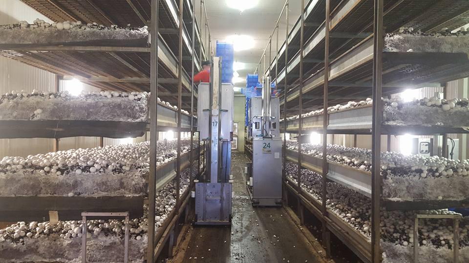 tour tham quan nông nghiệp công nghệ cao hà lan